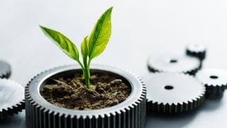 Wellness as a Strategic Growth Driver